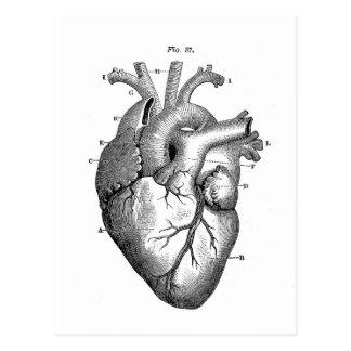 Coeur anatomique noir cartes postales