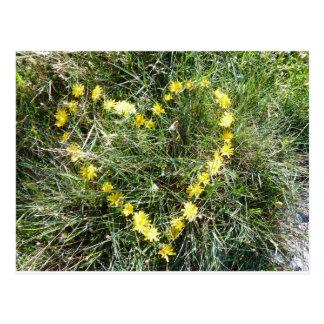 Coeur des fleurs carte postale