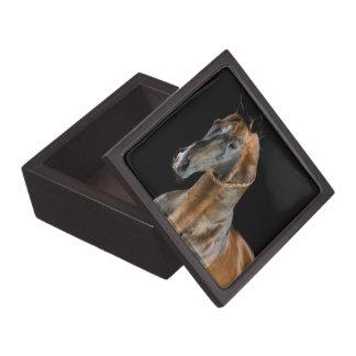 Coffret Cadeau De Première Qualité Cheval d'Akhal-Teke
