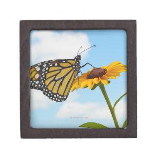 Coffret Cadeau De Première Qualité Papillon de monarque sur une Susan observée par no