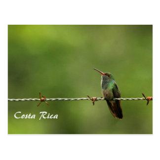 Colibri Costa Rica de carte postale