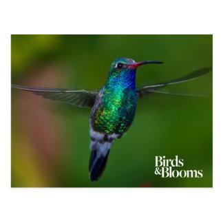 Colibri de flottement carte postale