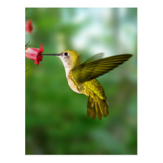 Colibri De Oro República Dominicana Carte Postale