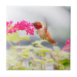 Colibri et fleurs de vol carreau