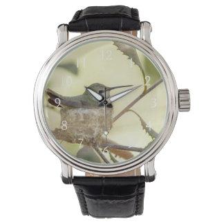 Colibri femelle sur son nid montres cadran
