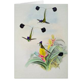 Colibri, gravé par Walter et Cohn Carte De Vœux