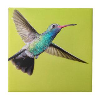 Colibri large-affiché par mâle en vol carreau