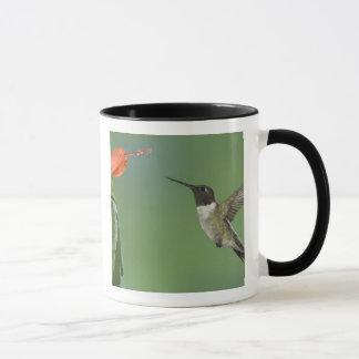 colibri Rubis-throated, Archilochus Mug