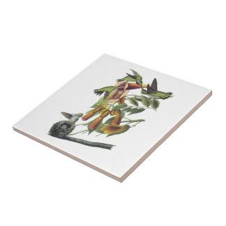 colibri Rubis-throated par Audubon Carreau
