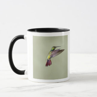 Colibri Vert-breasted Anthracocorax 2 de mangue Mugs