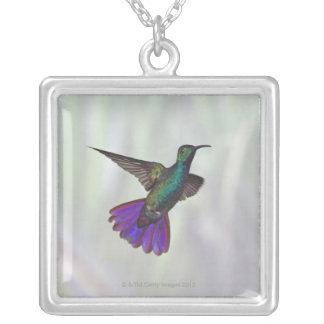 Colibri Vert-breasted Anthracocorax de mangue Pendentif Carré
