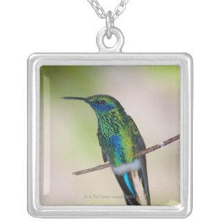 Colibri vert de Violet-oreille Pendentif Carré