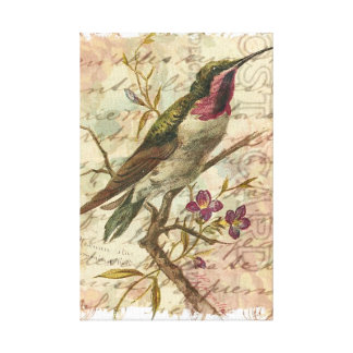 Colibri vintage toiles