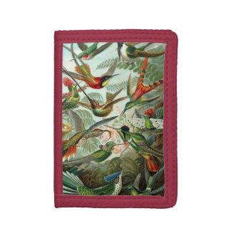 Colibris par Ernst Haeckel, arbres vintages