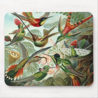 Colibris par Ernst Haeckel, arbres vintages Tapis De Souris