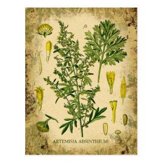 Collage botanique d'absinthe carte postale
