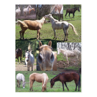 Collage de cheval carte postale