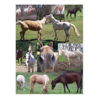 Collage de cheval cartes postales