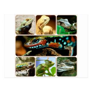 Collage de lézard carte postale