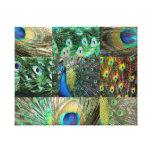 Collage vert-bleu de photo de paon toiles tendues