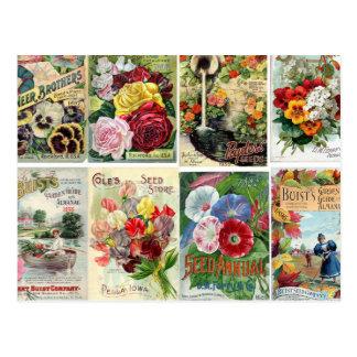 Collage vintage de catalogues de graine de fleur carte postale