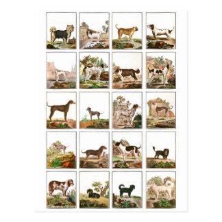 Collection de chien dans le style vintage carte postale
