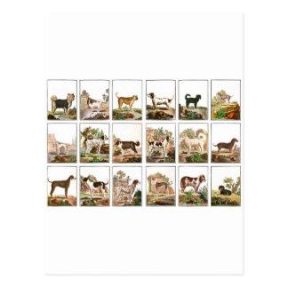 Collection de chien dans le style vintage cartes postales