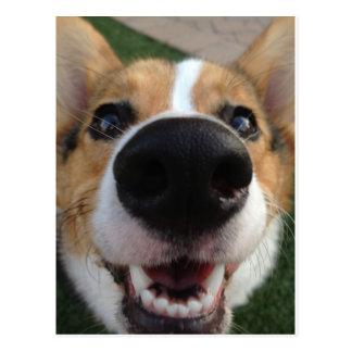 Collection de nez de chien de corgi de Gallois Cartes Postales