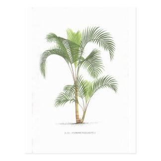 Collection d'illustration de palmier carte postale