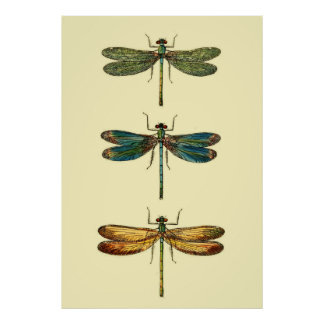 Collection d'insectes de libellule poster