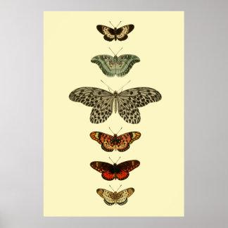 Collection d'insectes de papillon poster