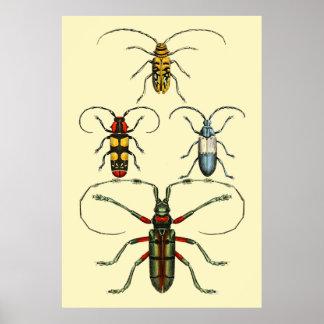 Collection d'insectes de scarabée posters