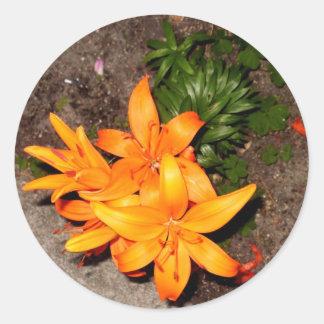 Collection orange de souvenir de fleur sticker rond