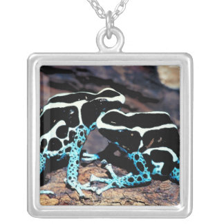 COLLIER 23898179