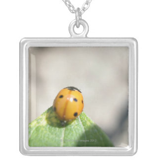 COLLIER 24102386