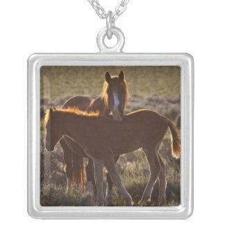 Collier Adulte et colt sauvages de caballus d'Equus de