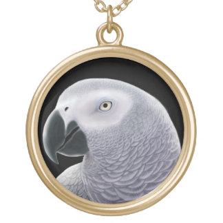 Collier amical de perroquet de gris africain