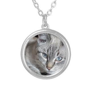 Collier Animal familier de maquereau de Mieze de chaton de