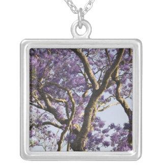 Collier Arbres de floraison de Jacaranda en nouveau parc