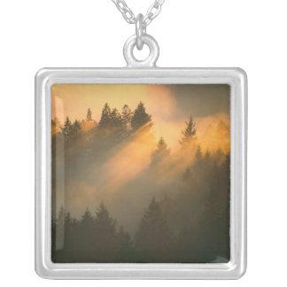 Collier Arbres de séquoia en brouillard côtier, le comté