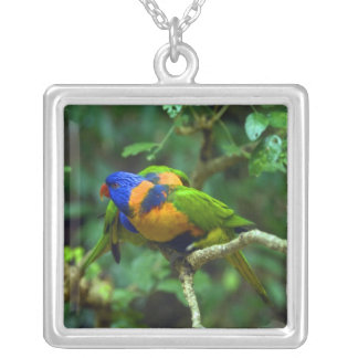 Collier Arc-en-ciel Lorikeets
