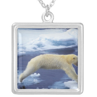 Collier Arctique, le Svalbard, ours blanc planant avec