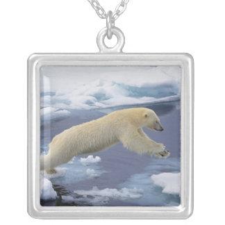 Collier Arctique, le Svalbard, ours blanc se prolongeant