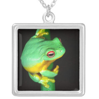Collier Australien Red Eye Treefrog, chloris de Litoria,