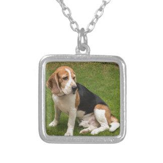Collier Beagle