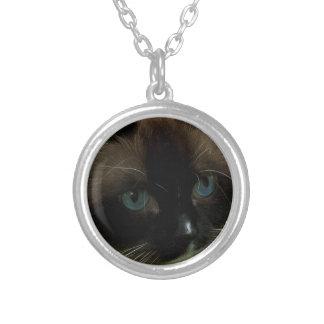 Collier Beau chat de Ragdoll