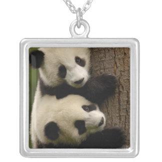 Collier Bébés de panda géant (melanoleuca d'Ailuropoda) 2