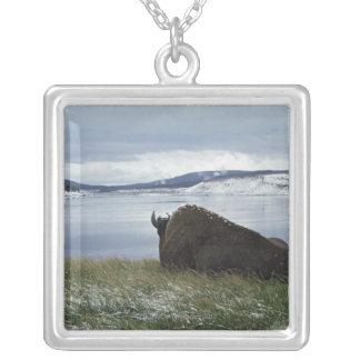 Collier Bison se reposant par la rivière Yellowstone avec