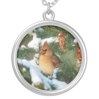 Collier Cardinal du nord dans l'arbre, l'Illinois