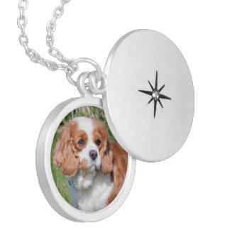 Collier cavalier de photo de chien d'épagneul du R